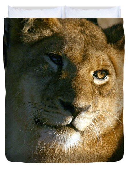 Young Lion Duvet Cover