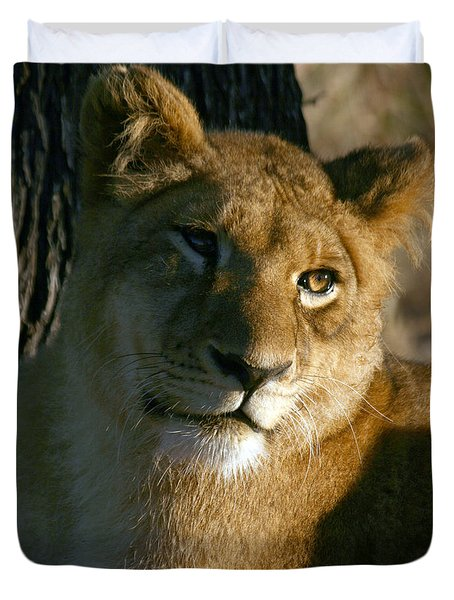Duvet Cover featuring the photograph Young Lion by Karen Zuk Rosenblatt