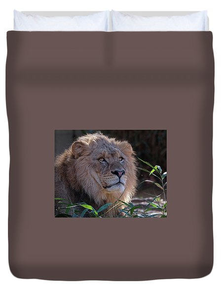 Young Lion King Duvet Cover by Ronda Ryan