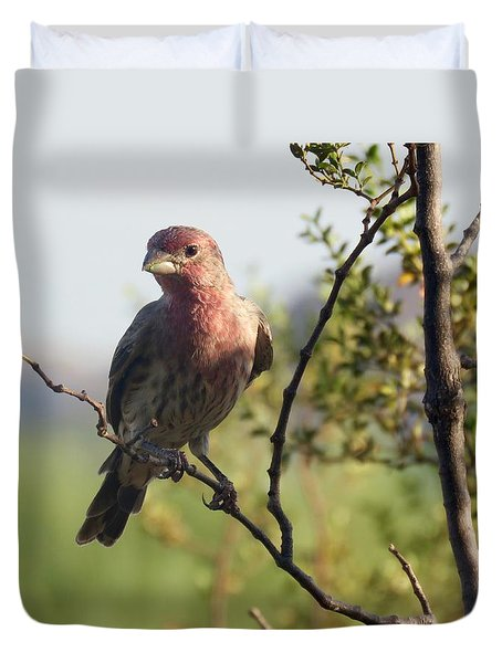 Young Male House Finch Duvet Cover