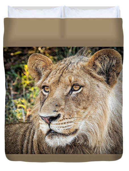 Duvet Cover featuring the photograph Young  Male Lion by Stefan Nielsen