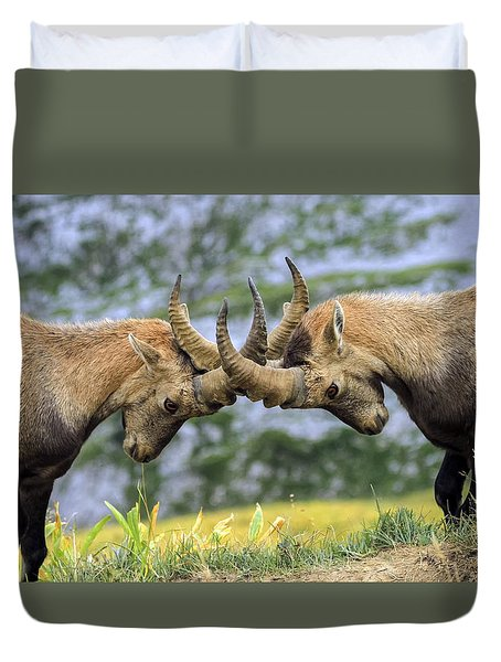Young Male Wild Alpine, Capra Ibex, Or Steinbock Duvet Cover