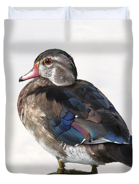 Young Male Wood Duck Duvet Cover