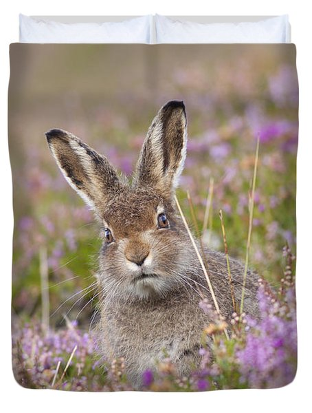 Young Mountain Hare In Purple Heather Duvet Cover