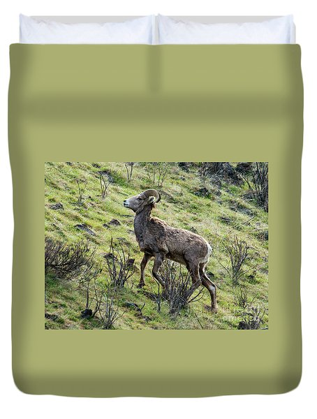 Duvet Cover featuring the photograph Young Ram Climbing by Mike Dawson