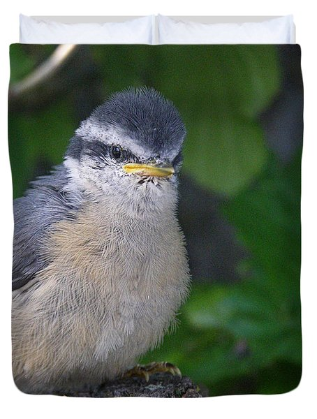 Duvet Cover featuring the photograph Young Red-breasted Nuthatch No. 1 by Angie Rea