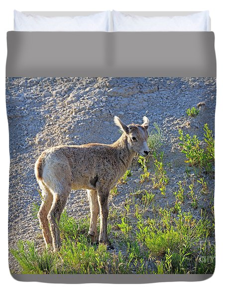 Young Rocky Mountain Bighorn Sheep Duvet Cover by Louise Heusinkveld