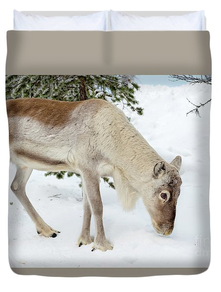 Young Rudolf Duvet Cover by Delphimages Photo Creations