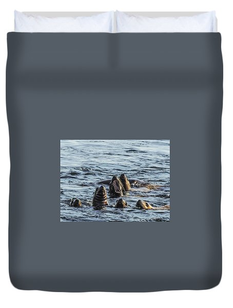Young Sea Lions At Play Duvet Cover