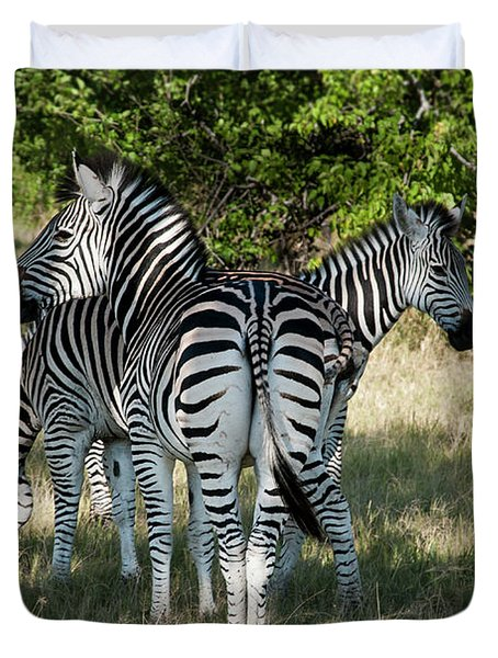 Three Zebras Duvet Cover