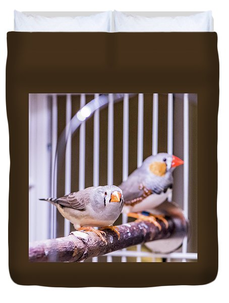 Zebra Finch Pair Duvet Cover