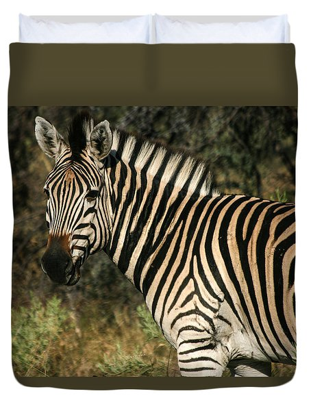 Duvet Cover featuring the painting Zebra Watching by Karen Zuk Rosenblatt