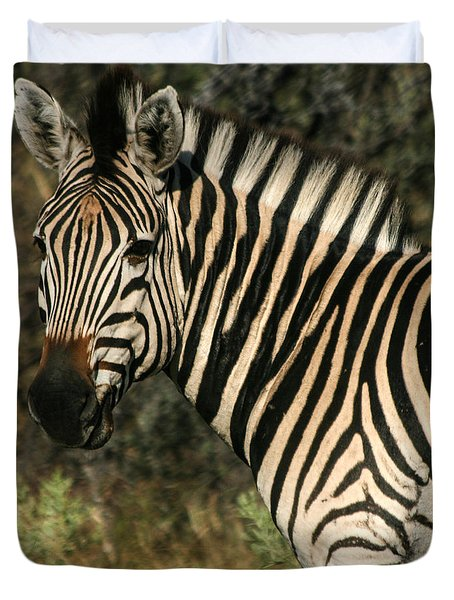 Duvet Cover featuring the photograph Zebra Watching Sq by Karen Zuk Rosenblatt