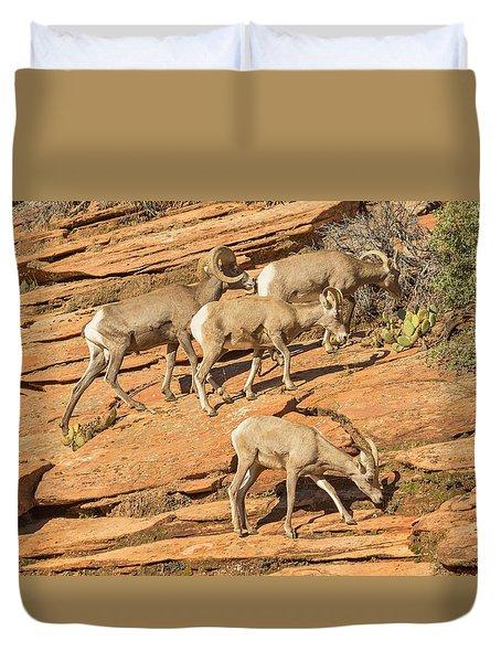 Zion Big Horn Sheep Duvet Cover