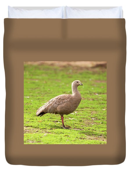 Duvet Cover featuring the photograph Cape Barren Goose Out In Nature by Rob D