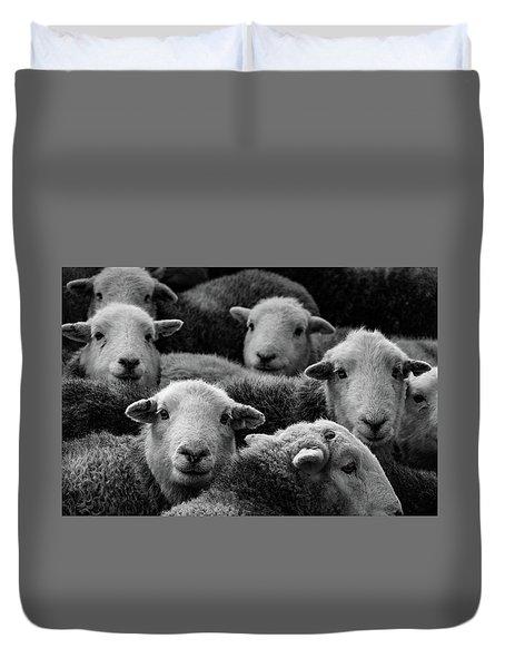 Flock Of Herdwicks Duvet Cover