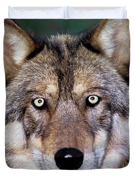 Gray Wolf Portrait Endangered Species Wildlife Rescue Duvet Cover