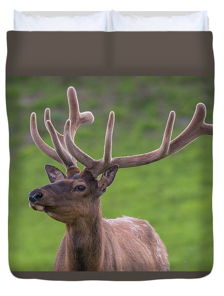 Duvet Cover featuring the photograph ME1 by Joshua Able's Wildlife