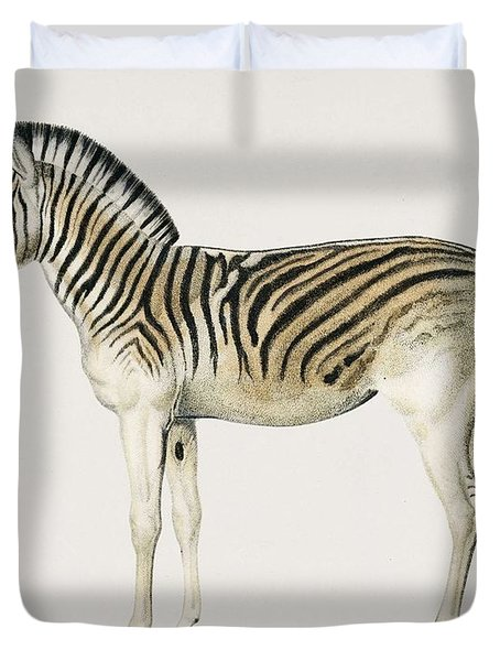 Mountain Zebra  Dauw  Illustrated By Charles Dessalines D' Orbigny  1806-1876  Duvet Cover