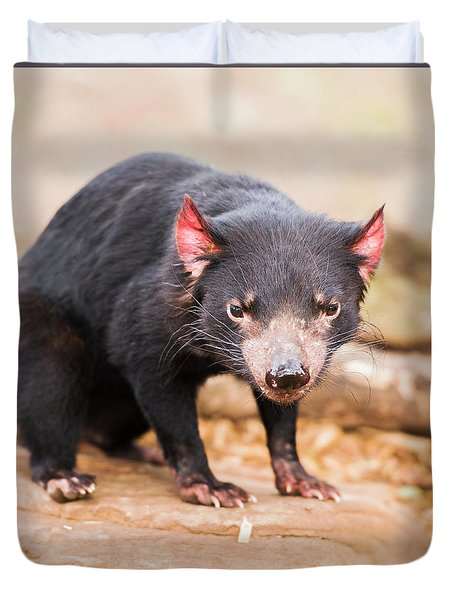 Duvet Cover featuring the photograph Tasmanian Devil In Hobart, Tasmania by Rob D