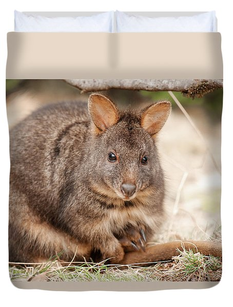 Duvet Cover featuring the photograph Australian Bush Wallaby Outside During The Day. by Rob D
