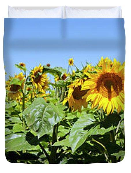 Sunflowers Helianthus Annuus Duvet Cover