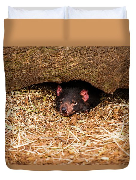Duvet Cover featuring the photograph Tasmanian Devil In Hobart, Tasmania. by Rob D