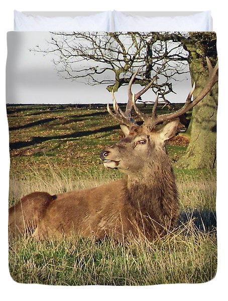 28/11/18  Tatton Park. Stag In The Park. Duvet Cover