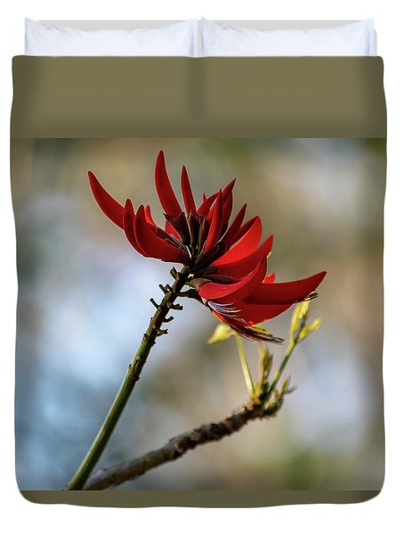 Coral Tree Flowers Duvet Cover