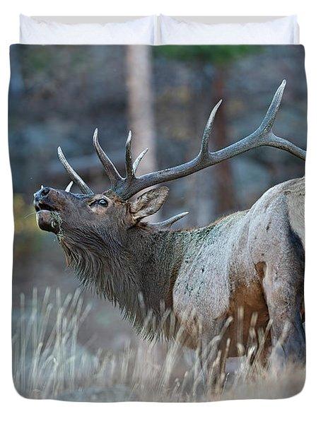 Rocky Mountain Bull Elk Bugling  Duvet Cover