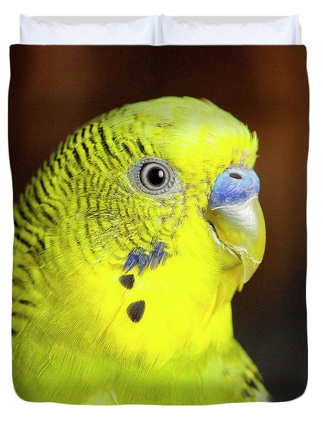 Portrait Of Budgie Birds Duvet Cover