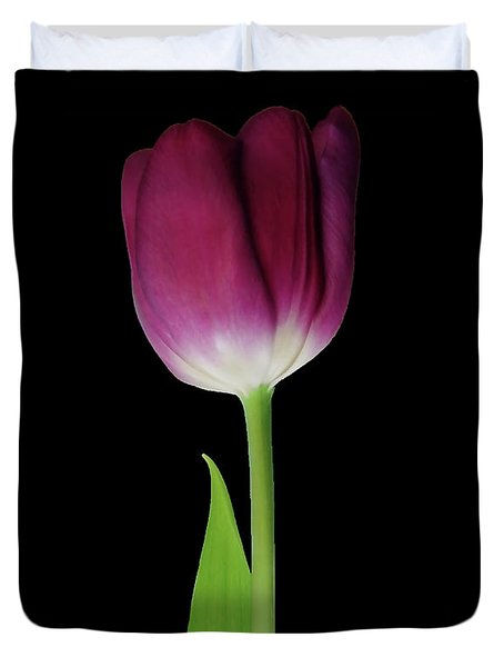 A Beautiful Red Tulip On Black Duvet Cover