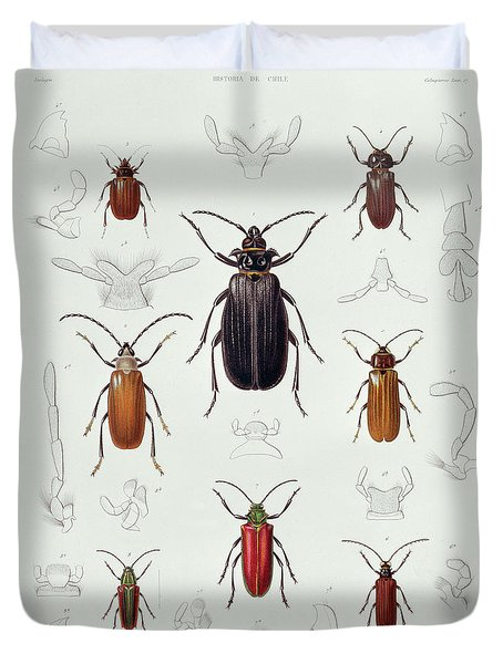 A Collection Of Coleoptera Found In Chile, Illustration From Historia De Chile Duvet Cover