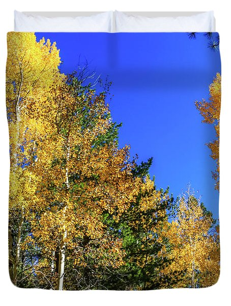 Arizona Aspens In Fall 1 Duvet Cover