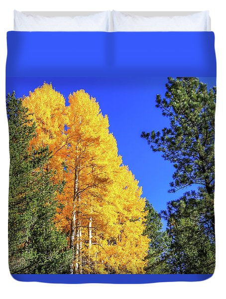 Arizona Aspens In Fall 4 Duvet Cover