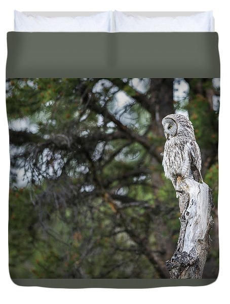Duvet Cover featuring the photograph B17 by Joshua Able's Wildlife
