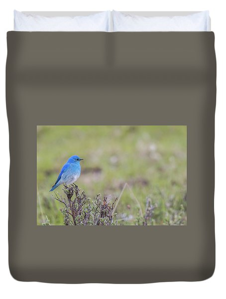 Duvet Cover featuring the photograph B23 by Joshua Able's Wildlife