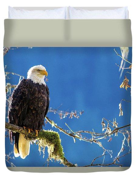 Backlit Bald Eagle In Squamish Duvet Cover
