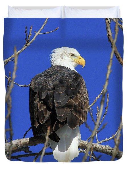 Bald Eagle And Blue Sky Duvet Cover