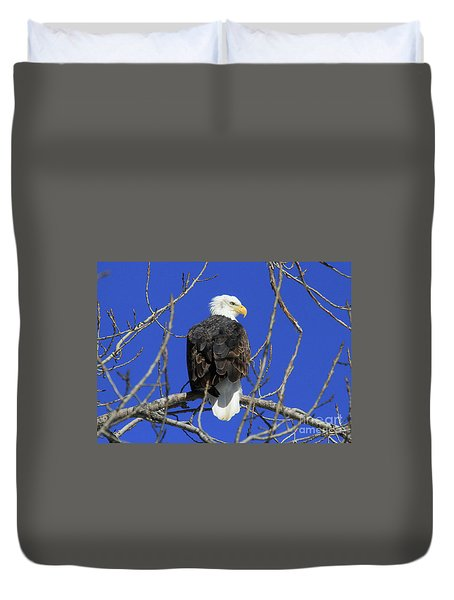 Bald Eagle And Blue Sky Duvet Cover