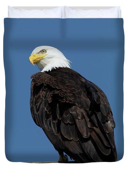 Bald Eagle Sitting  Duvet Cover