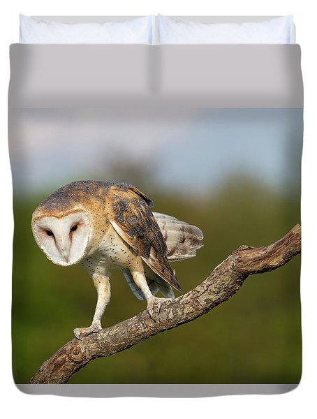 Barn Owl 5151801 Duvet Cover