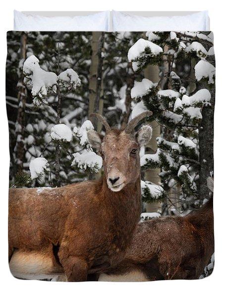 Bighorn Sheep In Deep Snow Duvet Cover