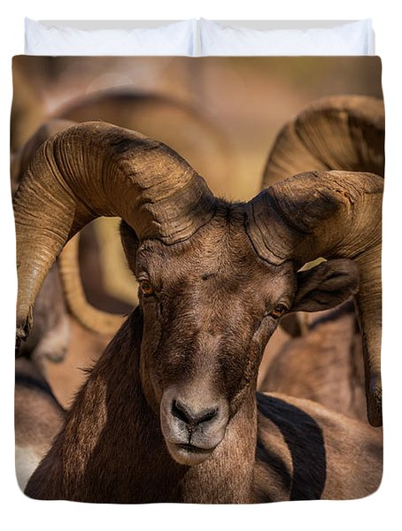 Bighorns Resting In The Afternoon Sun Duvet Cover