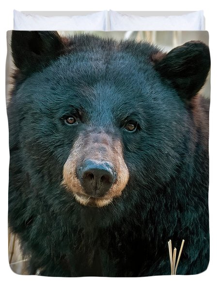 Black Bear Closeup Duvet Cover