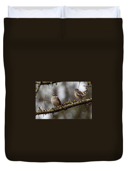 Black-crowned Tchagra And White-browed Scrub-robin Duvet Cover