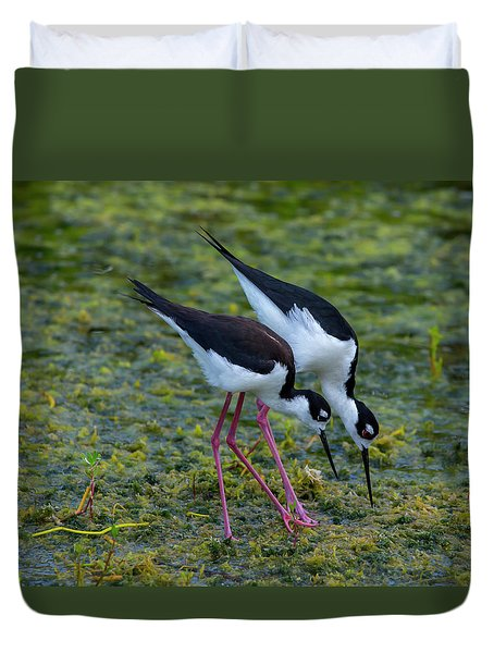 Black-necked Stilts Duvet Cover