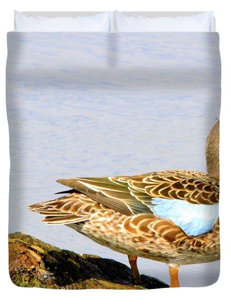 Blue-winged Teal Female Duck Duvet Cover