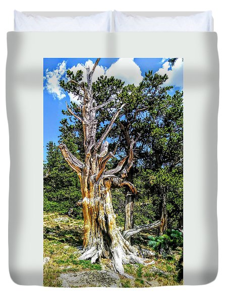 Duvet Cover featuring the photograph Bristlecone1 2018 by Aaron Bombalicki