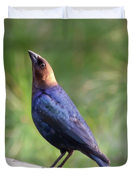 Brown-headed Cowbird Duvet Cover